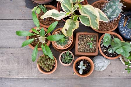 aloe vera flowers: the Green flower on vase pot in garden make feel fresh and relax
