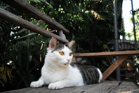 Close focus of cute cat