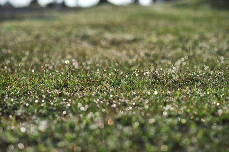 fog on green grass in morning make feel fresh and relaxation Imagens