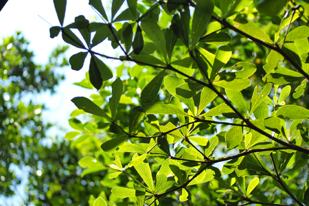 green leaf of tree in nature feel fresh and relaxation Imagens
