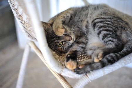 cat sleep on chair so cute