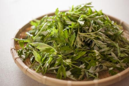 Artemisia princeps of japanese