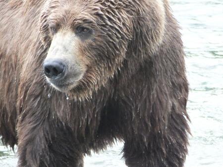 salmon falls: Bear Brooks Falls  Katmai National Park and Preserve Alaska