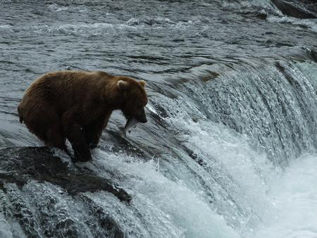 brooks: Bear Brooks Falls  Katmai National Park and Preserve Alaska