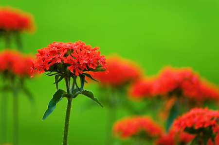show garden: red flowers Stock Photo