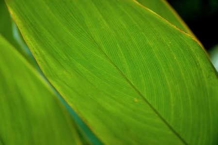 green leaf Stock Photo - 2830984