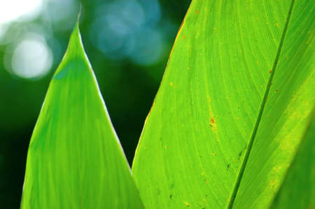green leaf Stock Photo - 2831000