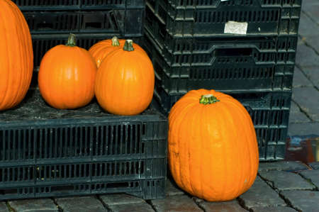 pumpkins at market photo