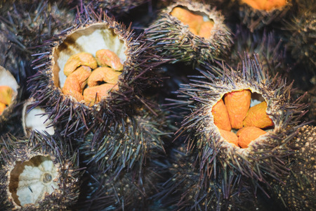 Close up sea urchin best of Japanese food in fish market Japan