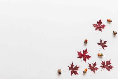 Maple leavesleaf dry red color in fall autumn seasonal over white background with copy space. flatlay