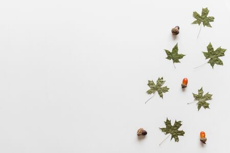 Maple leavesleaf dry green color in fall autumn seasonal over white background with copy space. flatlay