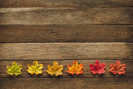 Maple leavesleaf changing color from green to red in fall autumn seasonal over wood table background with copy space. flatlay