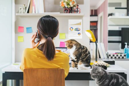 Young Asian woman working from home due to coronavirus covid-19, lifestyle working and playing with her cute cat, Work from home concept