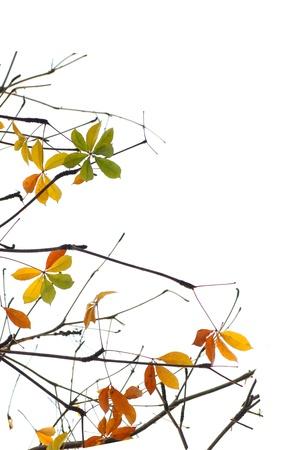 Fall leave isolate Stock Photo - 8913051