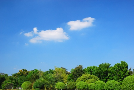 Bush and cloud on blue photo