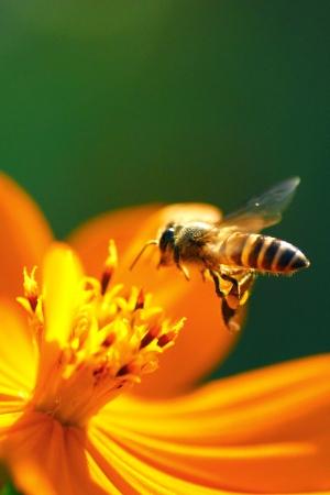 Flying Bee photo