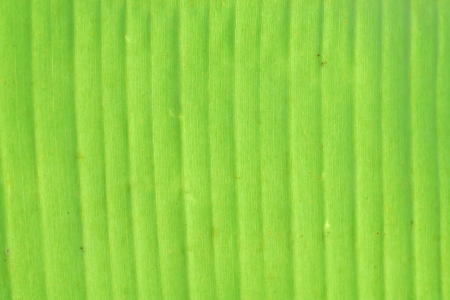 Abstract banana leaf background photo