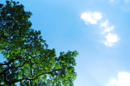 Bush and cloud on blue sky photo