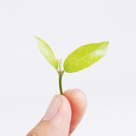 hand holding plant: hand holding seed plant