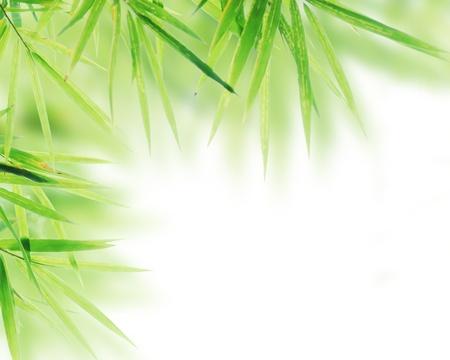 Bamboo leaves frame on white background Stock Photo