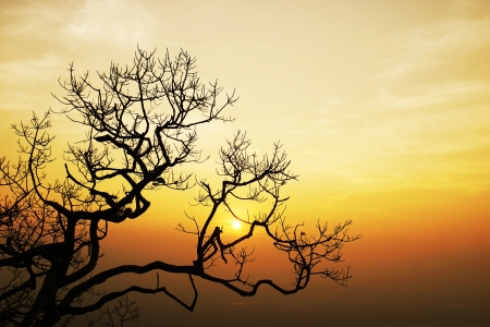 tree in sunset in winter season photo