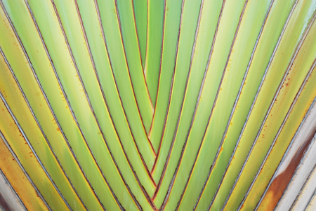 Pattern of ornamental banana branch Stock Photo