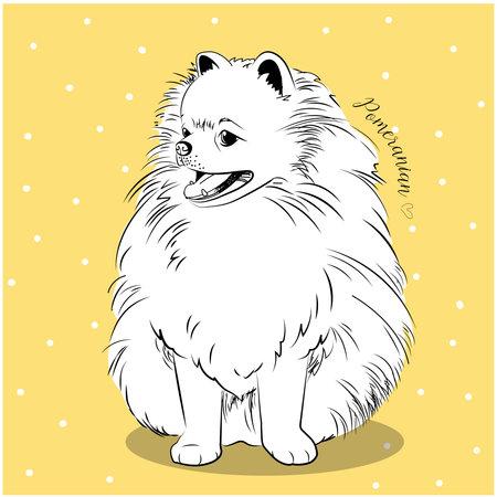 Pomeranian dog. Vector illustration of cute puppy. - Vector
