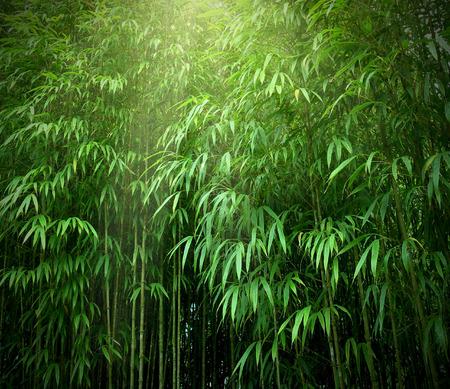 bambou: Forêt de bambous asiatique avec la lumière du soleil.