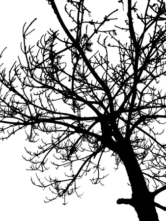 oak wood: Tree silhouette