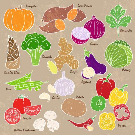 Sammlung von Hand gezeichnet Gemüse und Gewürzen. Vektorgrafik