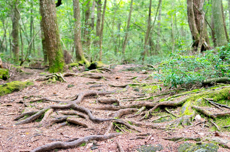 extensive: Extensive forest Stock Photo