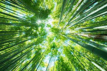 Bosque de bambú en Japón Kamakura Foto de archivo - 49026770