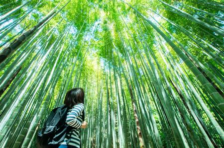 kamakura: Bamboo forest at kamakura japan Stock Photo
