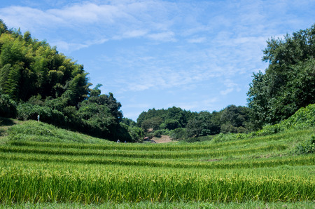 agriculturalist: Tanada(rice field),nara(prefectures),tourism of japan