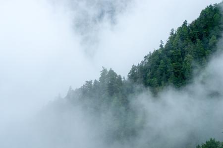 fog: mountain fog