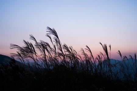 日本の曽爾高原、奈良観光