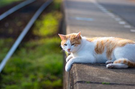 観光小湊鉄道千葉県の猫