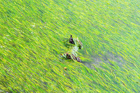 algae: algae Stock Photo