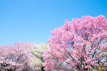 Shinjuku gyoen park,tokyo,japan Stock Photo