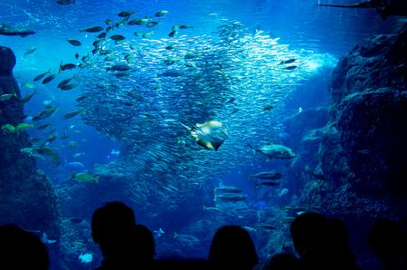 神奈川県の新江ノ島水族館