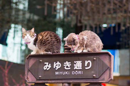 銀座、東京、日本