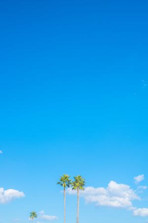 frutas tropicales: palmera  Foto de archivo