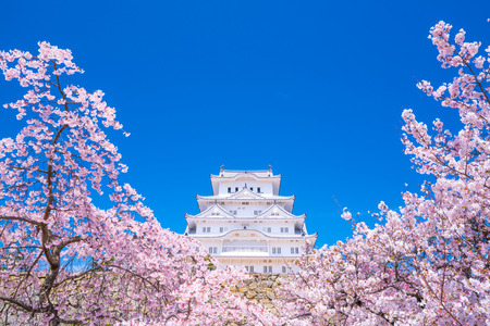 Himeji castle and Cherry Blossoms,hyogo,japan