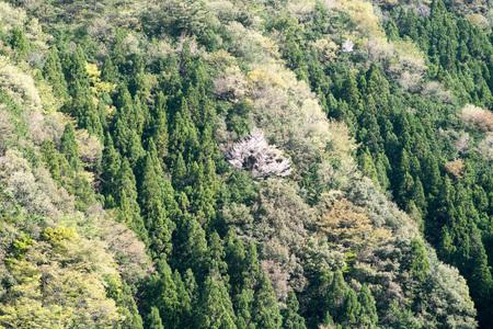 nara: Verdure mountain,nara,japan