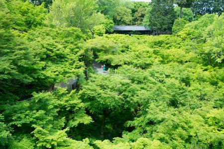 holiday gathering: japanese maple leaf at Tofukuji-temple,kyoto,tourism of japan