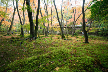 sightseeng: Gioji temple autumn scene,Kyoto,tourism of Japan Editorial