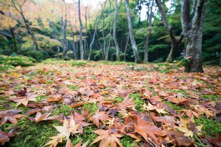 sightseeng: Gioji temple autumn scene,Kyoto,tourism of Japan Stock Photo
