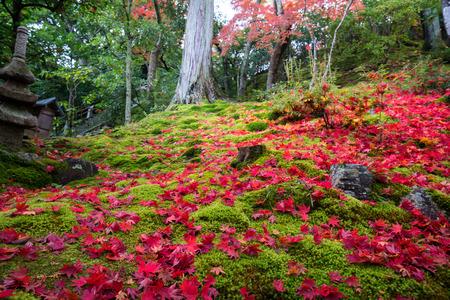 sightseeng: Joujakoji temple autumn scene,Kyoto,Japan Editorial