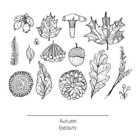Dibujado a mano hermoso juego del otoño de hojas, flores, ramas, setas y bayas, aislados en fondo blanco. Ejemplo blanco y negro que muestra la belleza del otoño de la naturaleza con objetos decorados. Ilustración de vector
