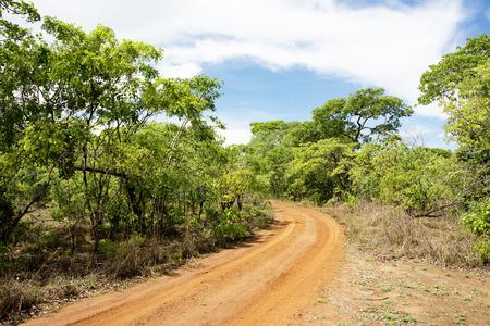 Dirt Road Turning in Brachystegia Woodlands, Kasungu National Park, Malawi Stock Photo - 35394221